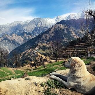 Todos param para admirar os Himalaias