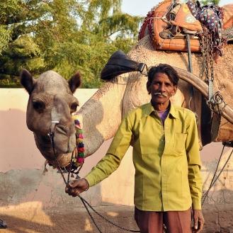 O orgulho de exibir um camelo bem cuidado